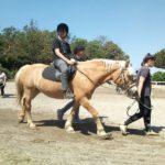 Soggiorno Estivo Estate INPSieme 2019 | Lazio | A cavallo nella natura-LA-MIA-ESTATE-19-7-150x150