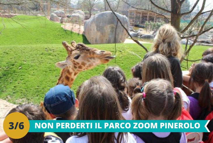 Parco Zoo, dove poter ammirare oltre 300 specie di animali provenienti da tutto il mondo