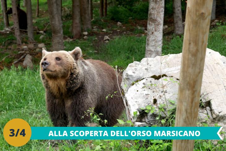 Il magico Museo dell'Orso Marsicano, per conoscere ed esplorare la vita del nostro amico Orso