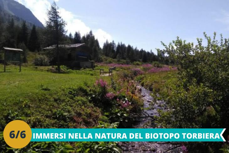 Biotopo Torbiera del Tonale, un emozionante sentiero che si snoda tra laghetti e fiumi nella splendida Val di Sole