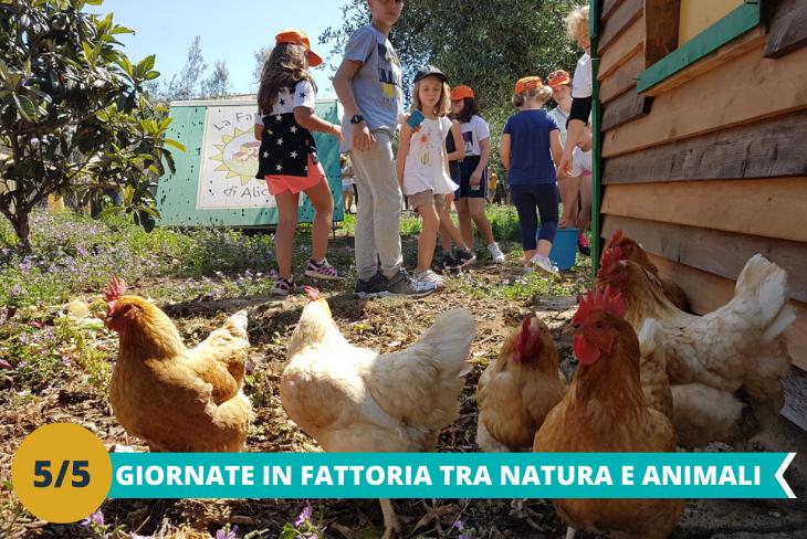 Giornate in fattoria dove i piccoli ospiti avranno la possibilità di conoscere gli animali e di stare a contatto con la natura