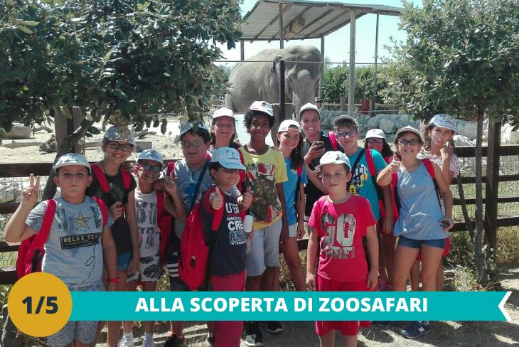 L'animato Parco Zoo Safari di Fasano, una riserva di grande importanza che conserva animali provenienti da tutti i continenti tra cui il leone, l'elefante africano, le giraffe ed i lemuri del Madagascar, da visitare per tutta la giornata