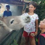 Soggiorno Estivo Estate INPSieme 2020 | HAPPY FARM - VITA IN FATTORIA-10-10-150x150