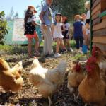 Soggiorno Estivo Estate INPSieme 2020 | HAPPY FARM - VITA IN FATTORIA-5-10-150x150